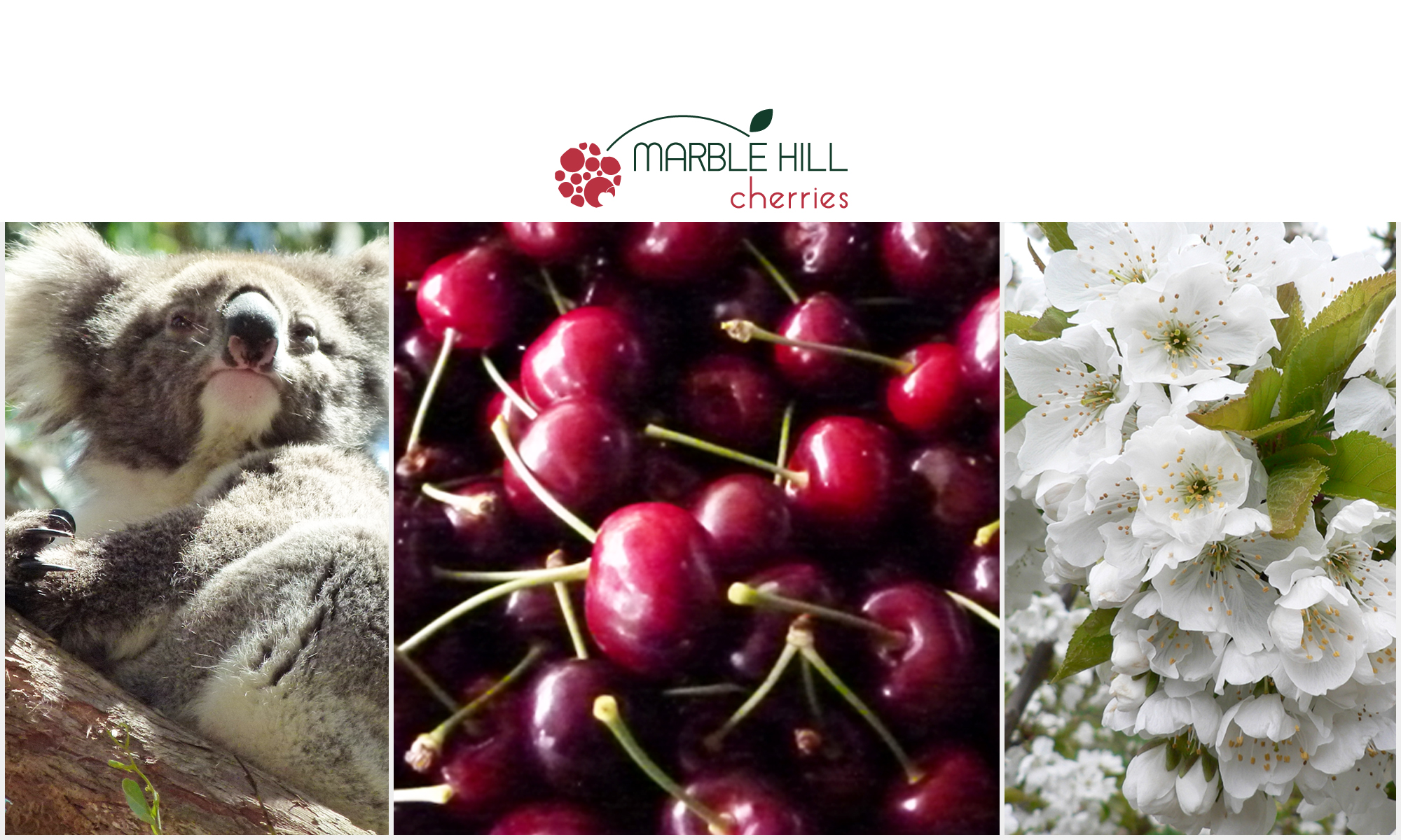 Marble Hill Cherries